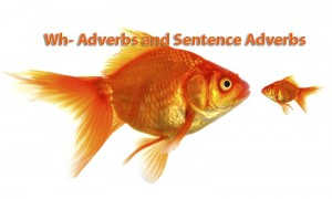 Wh- Adverbs and Sentence Adverbs